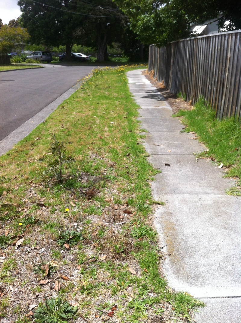 Plant on nature strip  - Do you plant on your nature strip?